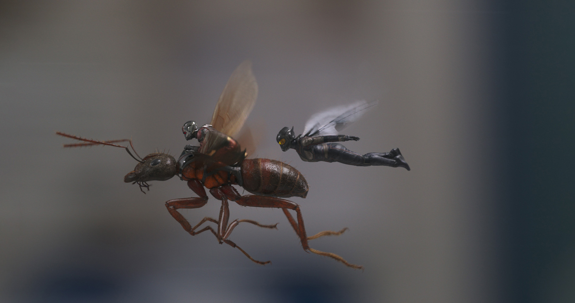 Image Result For Watch Ant Man And The Wasp Online Free